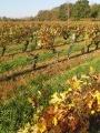 Boucle entre vignobles et vergers autour de Mareau-aux-Prés