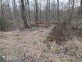 La Forêt de Bouconne, en empruntant en partie le GR®653