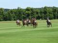 Course de polo
