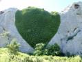 Crêtes de jean jean - Pieds de Lierres en forme de cœur