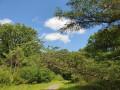 Croisement maison forestière et route de Montfort