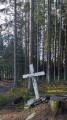 Balade en forêt parmi les Bruyères