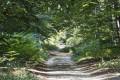 Dans la forêt (2)