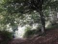 Dans la forêt de la Longue Vallée