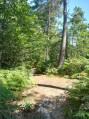Dans la forêt de Montmorency
