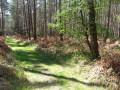 Dans la forêt domaniale de Montfort