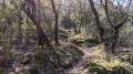 dans la forêt sur la crête