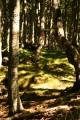 Dans la hêtraie de Serre-Pourcou la limite de la forêt domaniale