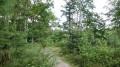 003 - Dans la pinède (forêt mixte)