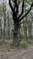 Dans le bois de lainboeuf