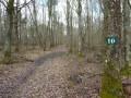 """Dans le bois de Languistre, la sente près de la parcelle """"10"""""""