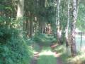 Dans le bois du Val Accard