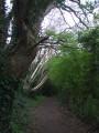Dans le sentier botanique