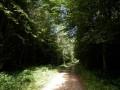 Dans le sous-bois du chemin de la randonnée