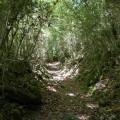 Dans le tunnel de verdure