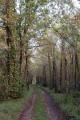 Dans les bois de Chinault