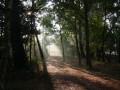 Dans Les Bois de Trémelin