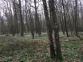 Dans les sous bois