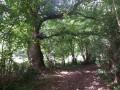 De beaux arbres bordent les chemins