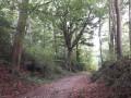 De grands et beaux hêtres bordent le chemin