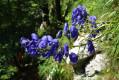De jolies fleurs à la descente...