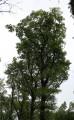 De très beaux arbres