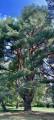 De très beaux arbres ...