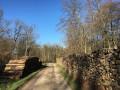 Début de la route forestière Charles Forman