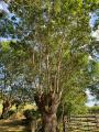 Le Bois des Dortières par le sentier des Boules à Loge-Fougereuse