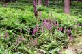 Décor végétal tout près de l'étang de la Bruyère
