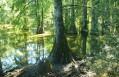 La Cascade de la Roche et les étangs de l'Isle Crémieu