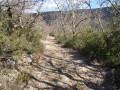 Des chemins et des sentiers sympathiques..