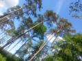 Balade forestière à Sainte-Croix-sur-Aizier