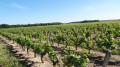 Au pays du vignoble Cheverny, une boucle depuis Montlivault