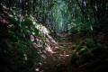 Descente dans le Bois de la Peyre Blanque