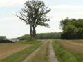 Deux arbres isolés