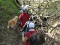difficultés temporaires sur le circuit suite à chute de nombreux arbres