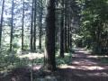 Forêt magique de Vallin