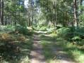 Duclair En forêt
