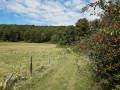 La petite forêt à Saint-Aubin-le-Guichard