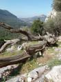 En chemin vers l'oppidum