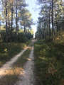 En forêt de Crissay