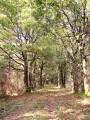 En forêt de Lancosme