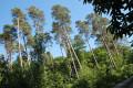 En forêt domaniale de Montfort
