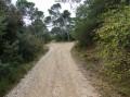 En forêt, la voie tourne légèrement à droite