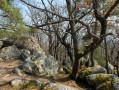 En haut du rocher de Ehrbergkopf