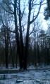 De la Maison forestière du Cadran au Chêne des Trois Frères et Courtagnon