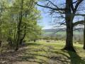 Par forêts et prairies en passant par Chaligny