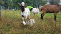 Enclos à chèvres dans les hauteurs