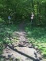 Entré de la forêt